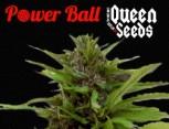 semilla de marihuana - power ball