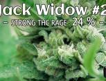 semilla de marihuana - jack widow 2