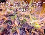 semilla de marihuana - power queen