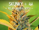 semilla de marihuana - skunky+